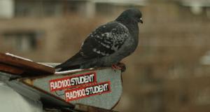 radio student golub